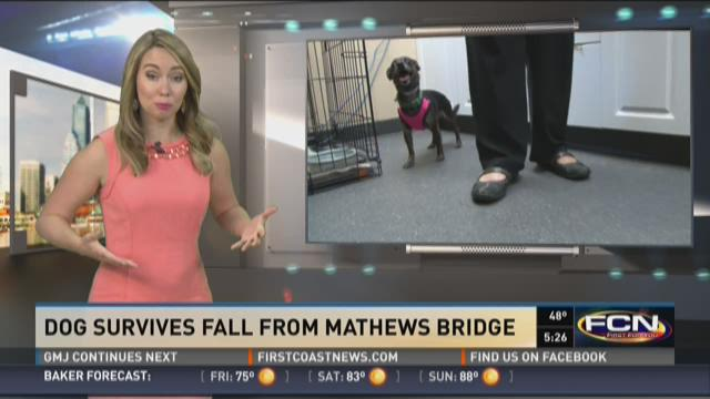 Dog survives fall from Mathews Bridge