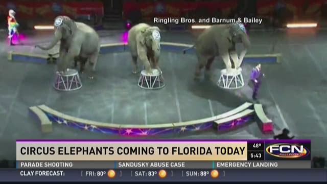 Circus elephants coming to Florida today