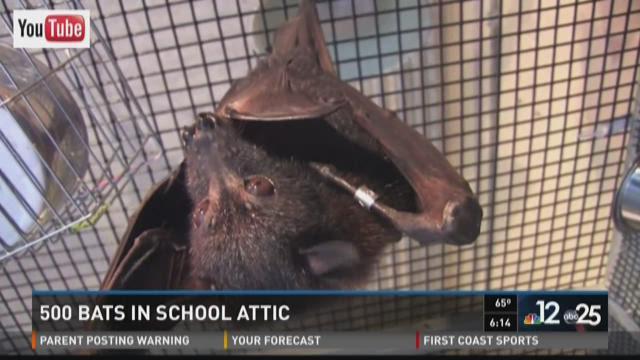 high school has bat problem