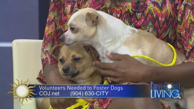 Jacksonville Animal Care & Protective Services in need of foster parents for a lot of sweet pets.