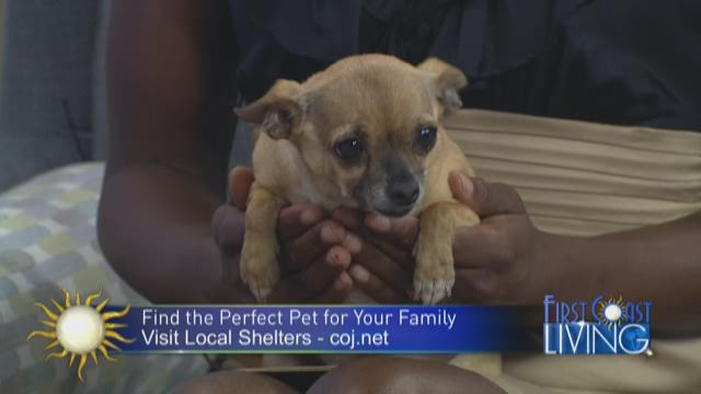 Mega Pet Adoption Event Recap