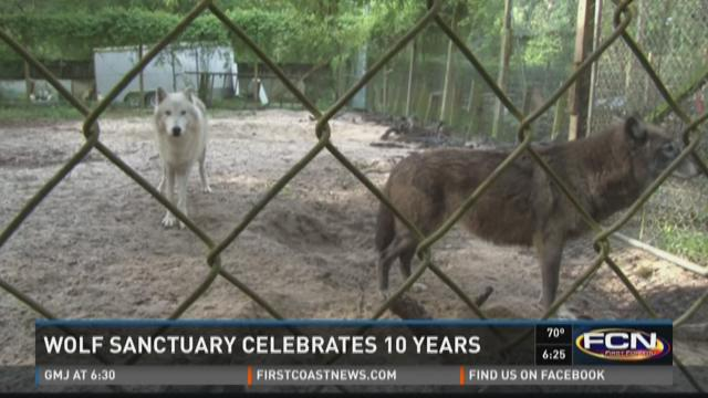John Knight and his wife started Big Oak Wolf Sanctuary