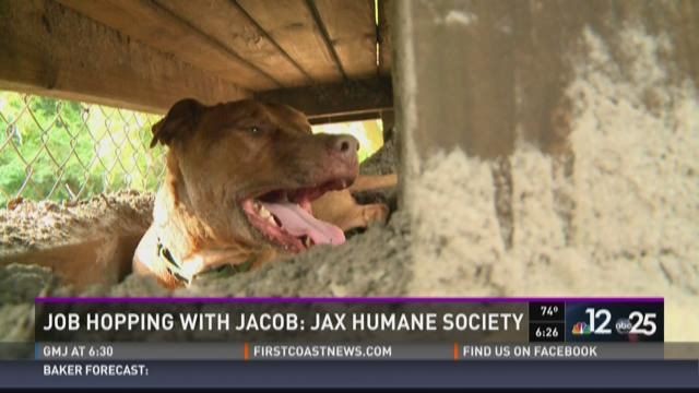 Job Hopping with Jacob: Jacksonville Humane Society